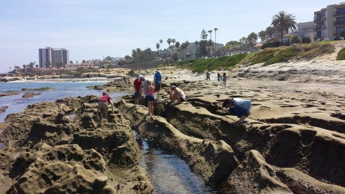 Checking out La Jolla Tide Pools