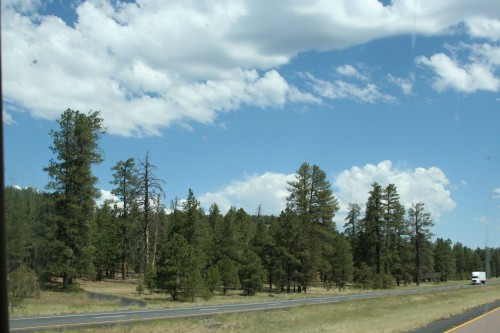 Trees and Clouds, a welcome site.